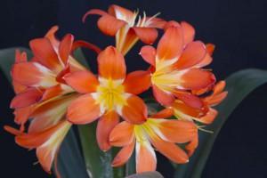 Orange Big Flowers