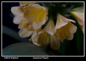 Cameron Peach