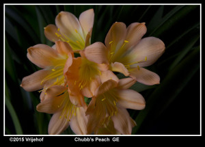 GE Peach