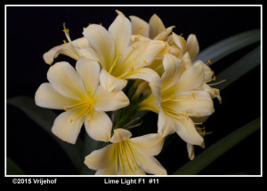 LimeLight11
