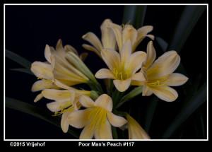 PMP117