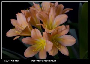 PMP2006