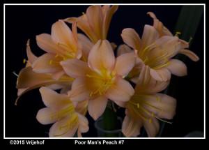 PMP7a