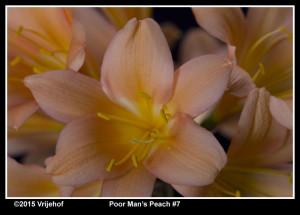 PMP7b