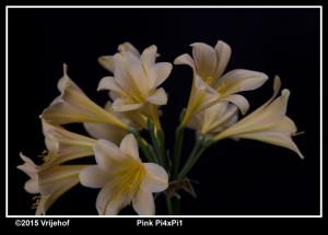 Pi4xPi1