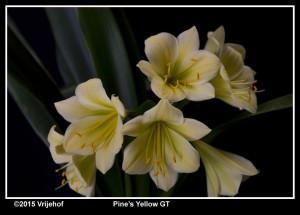 PinesYGT6