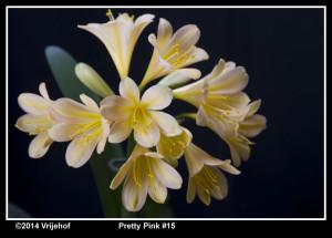 PrettyPi 15