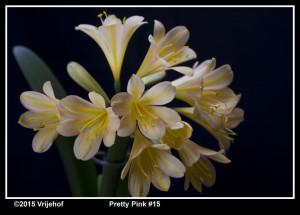 PrettyPi 15b