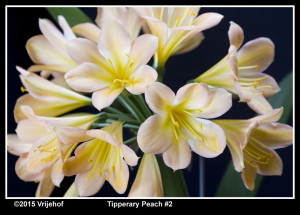 TipperaryPi2 b