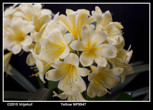 Y NP9947
