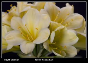 Y325xKVYb