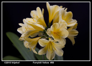 y Forryhill 99 b